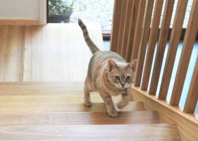 Cat on Stairs 2
